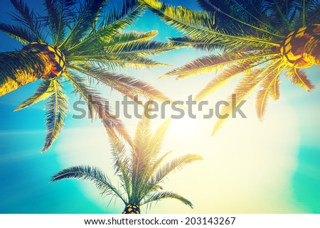 three palms - stock photo