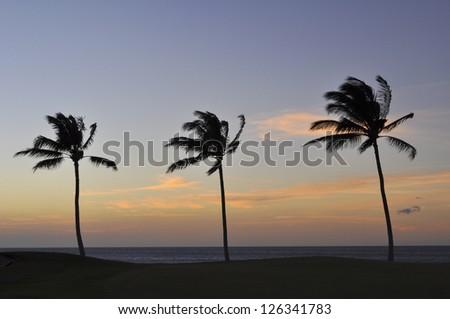 Three palms at sunset - stock photo