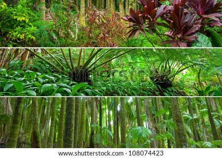Three panorama scenes from different tropical rain forests: various leafy tropical plants, fern and palm forests - stock photo