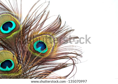 Three peacock feathers on a white background - stock photo