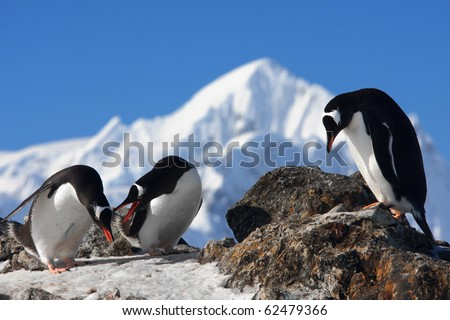 Three penguins are sitting on a rock, mountains in the background - stock photo