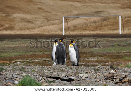 Three penguins stand in a field on the background of a football goal - stock photo