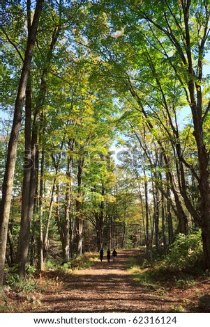 three people walking down a trail in the new england woods - stock photo