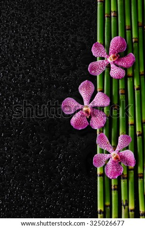 three pink orchid and bamboo grove on wet black background  - stock photo