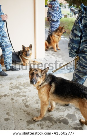Three policemen in camouflage with hepherds outdoor at police department. - stock photo