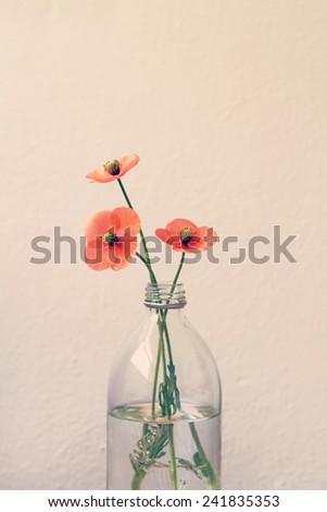Three poppies in a retro glass milk bottle vase - stock photo