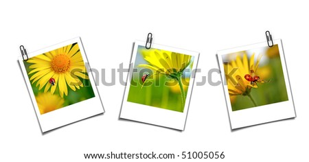 Three postcards with ladybugs - stock photo
