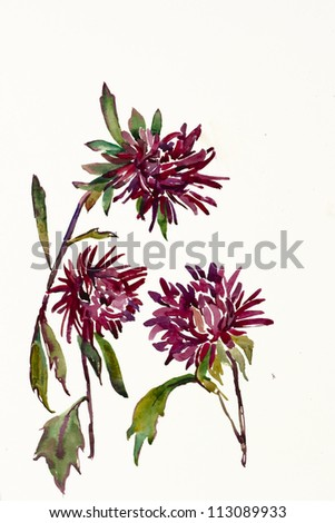 Three purple asters witha stems watercolor painting - stock photo