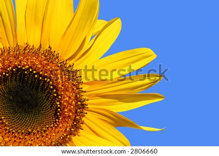 Three quarter section of a sunflower against a blue sky. - stock photo