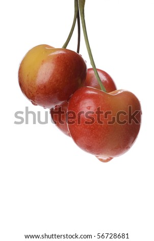 Three Ranier cherries with water droplets against a bright white background. - stock photo