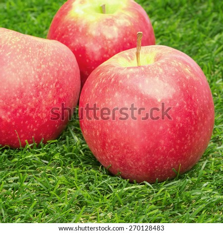 Three red apples in grass - stock photo