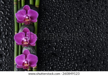 Three red orchid and bamboo grove on wet  - stock photo