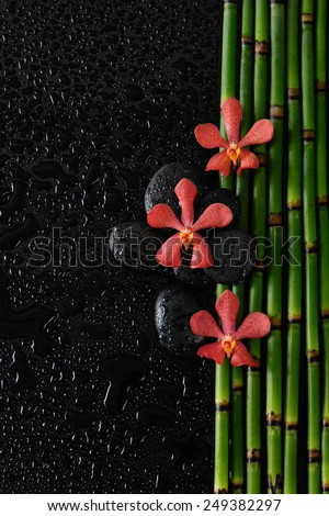 Three red orchid with stones on bamboo grove  - stock photo