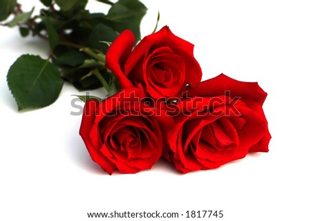 Three red roses on white - stock photo