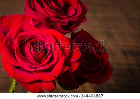Three red roses with the light fading - stock photo