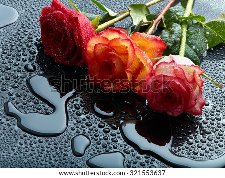 Three roses on black wet background - stock photo