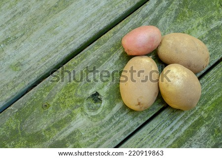 Three russet potatoes and one red organic sit on a moss covered wood planking at a local farm market - stock photo