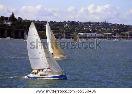 three sailing boat at an river,auckland,newland - stock photo