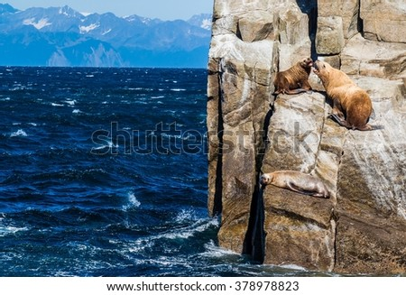 Three sea lions hauled out on steep island cliffs in Prince William Sound, Alaska - stock photo