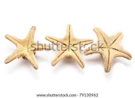 Three sea-stars, isolated on white. - stock photo