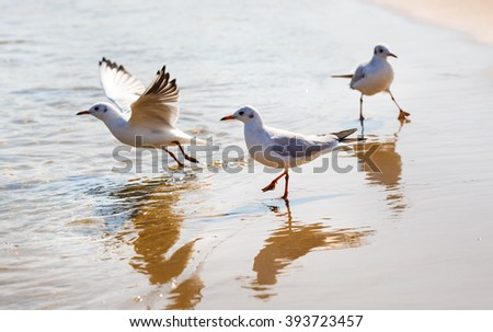 Three seagulls on the beach on a background of wet sand at the water's edge. Shallow depth of field. Selective focus. - stock photo