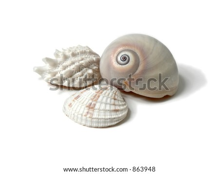 Three seashells - stock photo