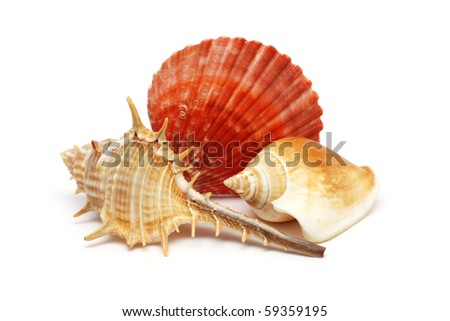 Three seashells put together isolated over white background. - stock photo