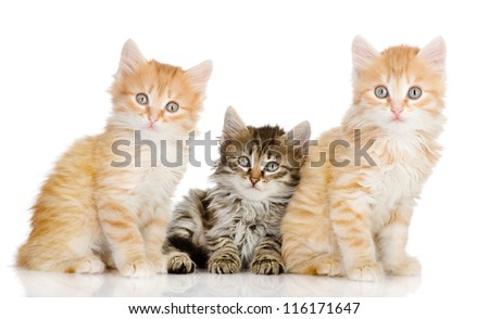 three small kittens look in a lens. isolated on white background - stock photo