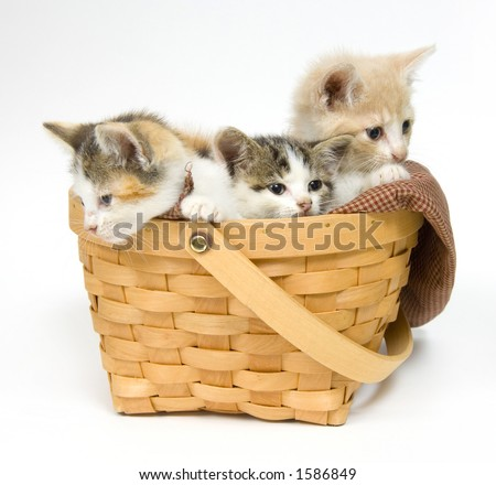 Three small kittens sitting in a basket - stock photo