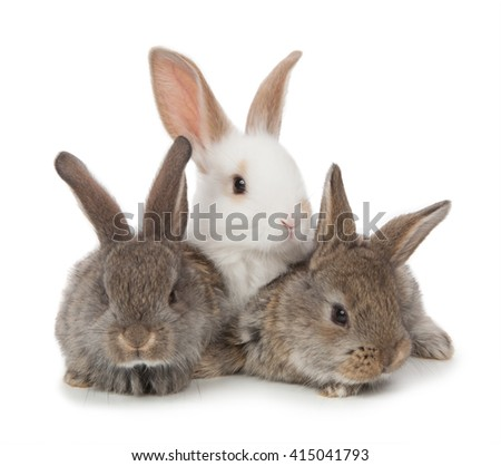 three small rabbit on a white background. - stock photo