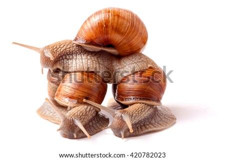 Three snail crawling on a white background closeup - stock photo