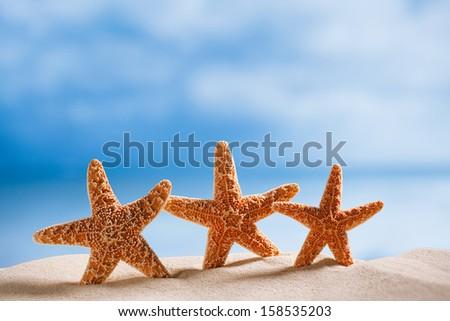 three starfish  with ocean , beach and seascape, shallow dof - stock photo