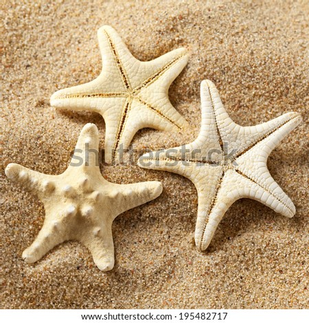 Three starfishes on sand - stock photo