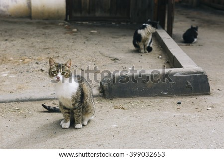 three stray cats, one of them looking at the camera - stock photo