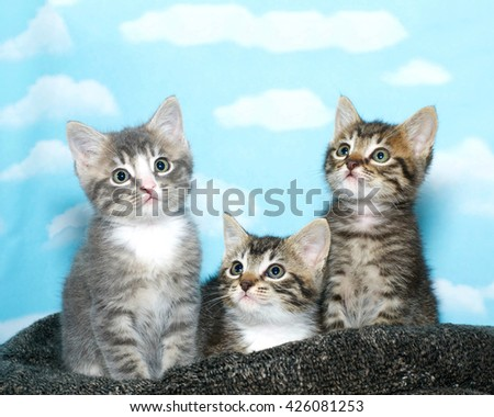 Three tabby kittens sitting on a black and gray bed, blue background with clouds. Kittens looking up - stock photo