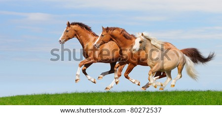 Three trakehner sorrel stallions gallop in field - stock photo
