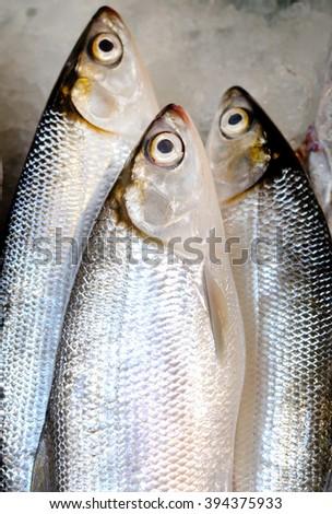 Three tropical fresh fish  - stock photo