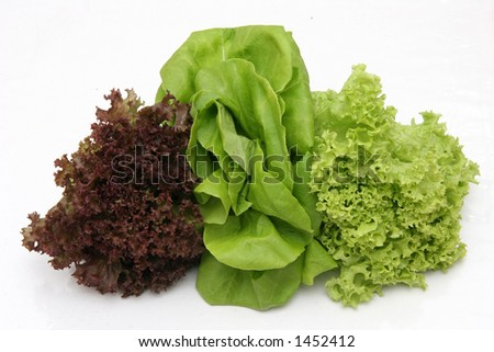 Three types of salad lettuce leaves - stock photo