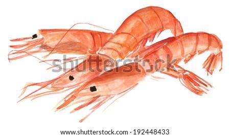 Three watercolour shrimps on white background - stock photo