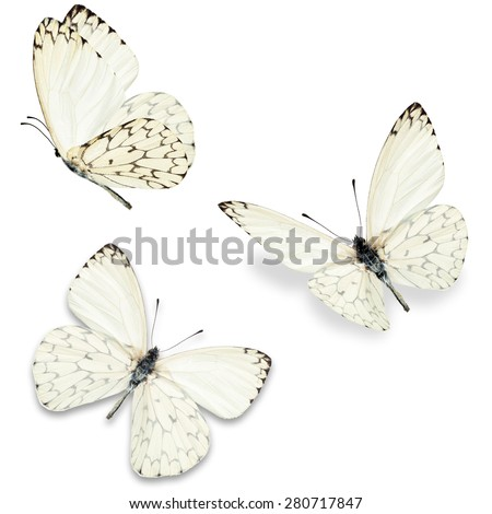 Three white butterfly, isolated on white background - stock photo