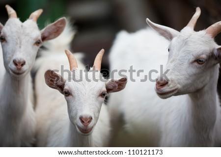 Three white kids - stock photo