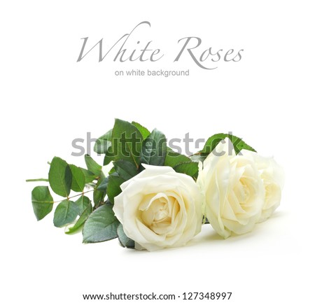 three white roses isolated on white - stock photo