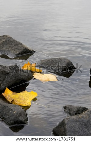 Three yellow, autumn colored rest against a set of rocks on a lake in this moody, scenic picture - stock photo