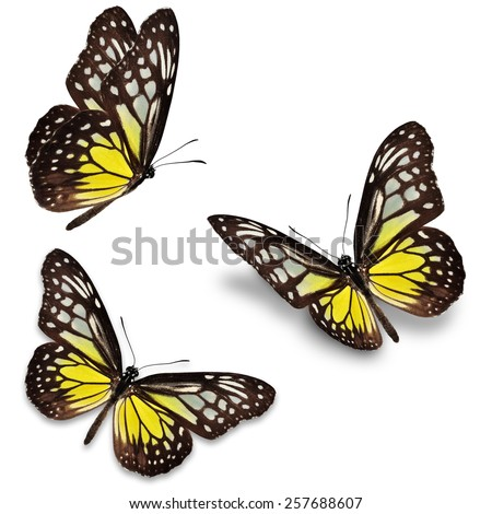Three yellow butterfly, isolated on white background - stock photo