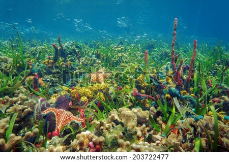 Thriving and colorful underwater marine life in tropical seabed with sponges, starfish, coral and small fish, Caribbean sea - stock photo