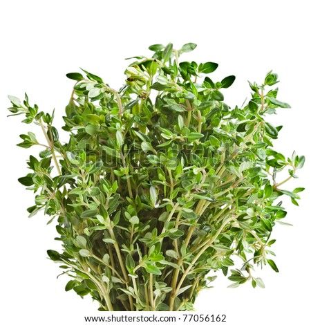 thyme herb isolated on white - stock photo