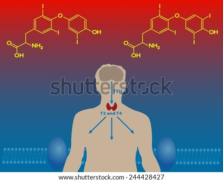 Thyroid hormones - stock photo