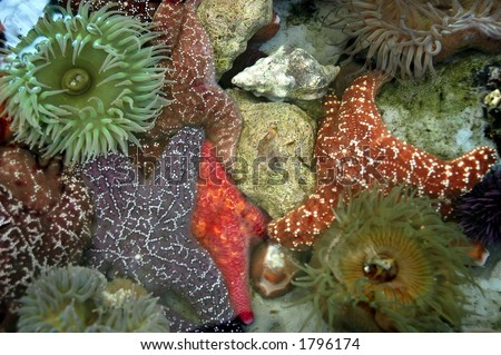 Tide Pool Creatures - stock photo