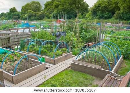 Tidy allotment garden with raised beds - stock photo