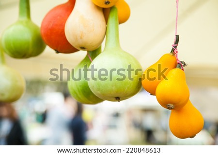 Tied together pumpkins of different sort with selective focus - stock photo
